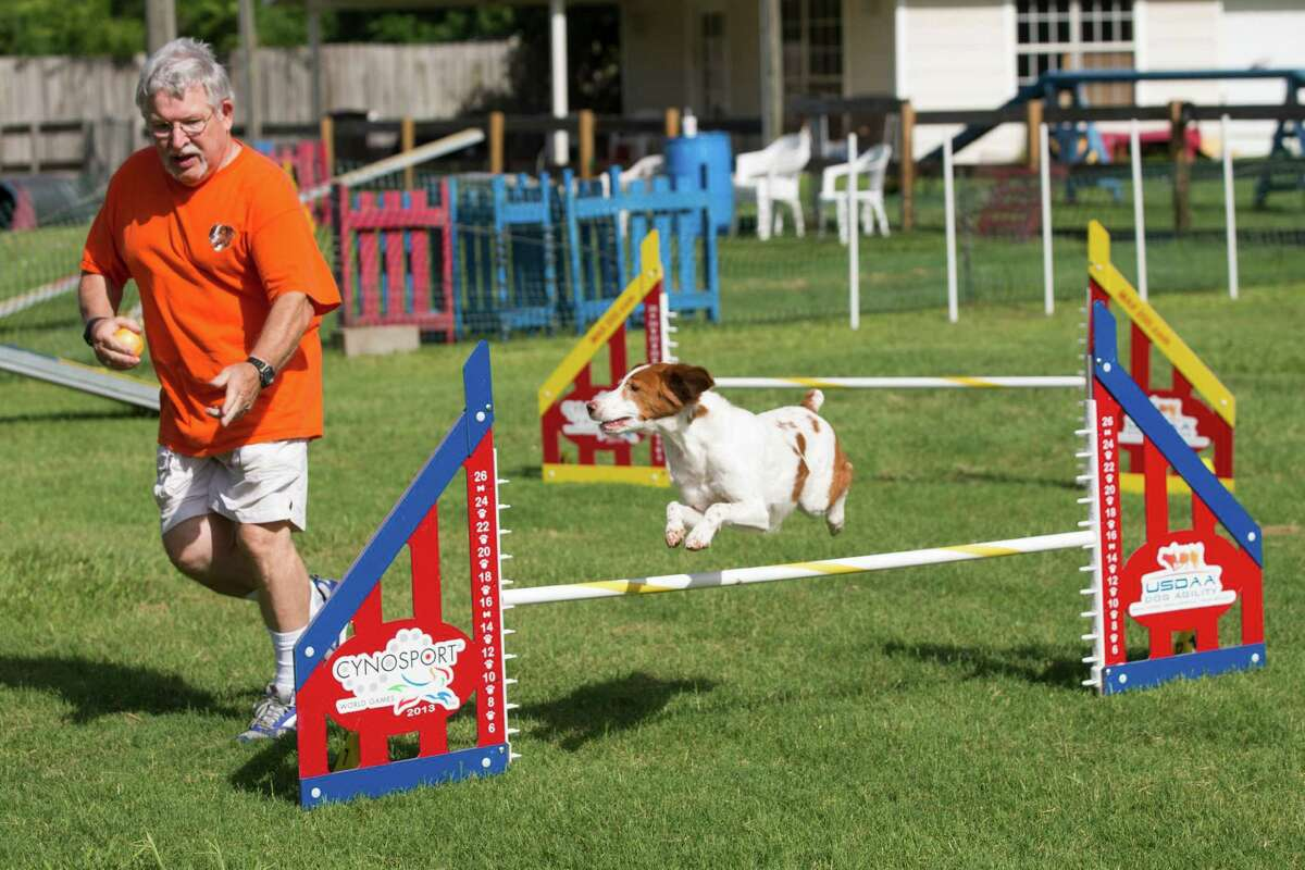 The Houston World Series of Dog Shows, which starts Wednesday and runs through Sunday. The extravaganza at NRG Center features breed judging, flyball teams racing against the clock, four-footed acrobats catching Frisbees and dancing, and the agility competitions, which are popular with fans and addictive for participants.