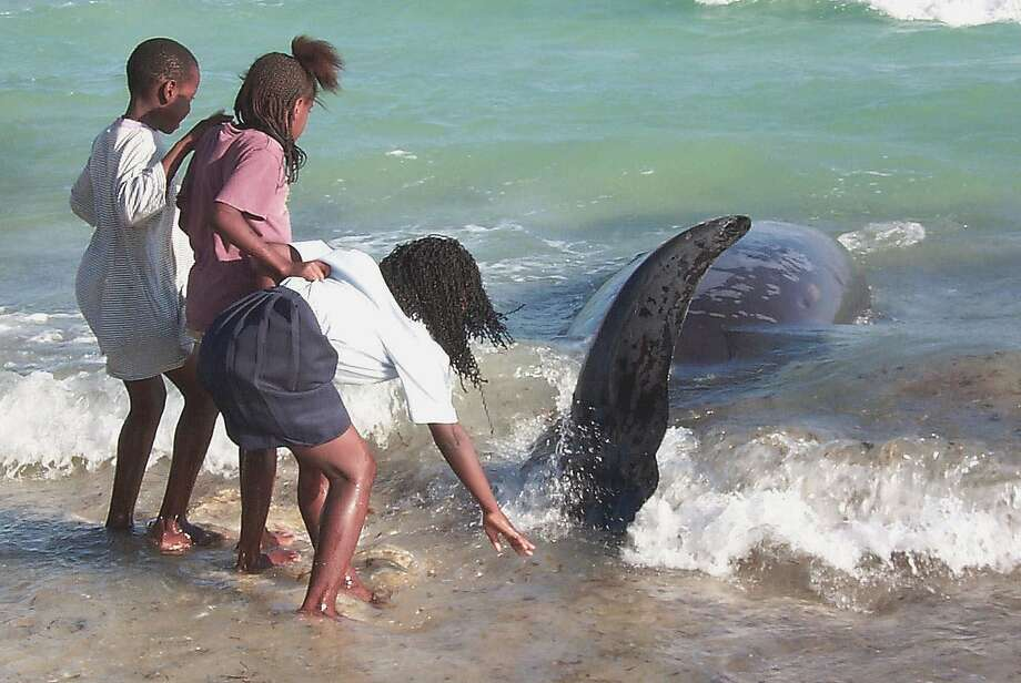 Children touch the tail of a whale on the coast of the Bahamas on March 15, 2000, when eight beached whales died the same day the U.S. Navy began testing anti-submarine exercises. Photo: Tim Aylen, Associated Press