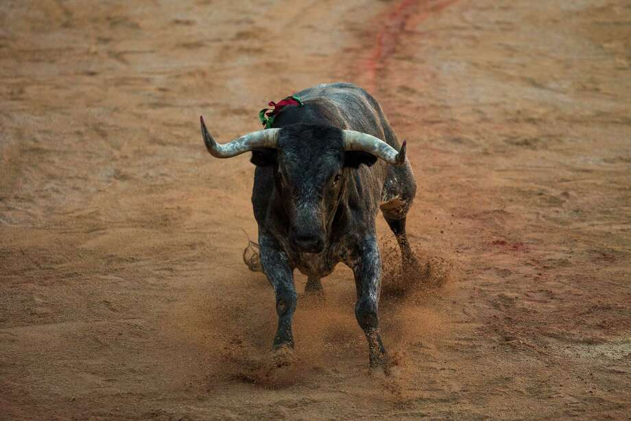 A Miura ranch fighting bull enters the arena during a bullfight of the San Fermin festival in Pamplona, Spain, Monday, July 14, 2014. Photo: Andres Kudacki, Associated Press / AP
