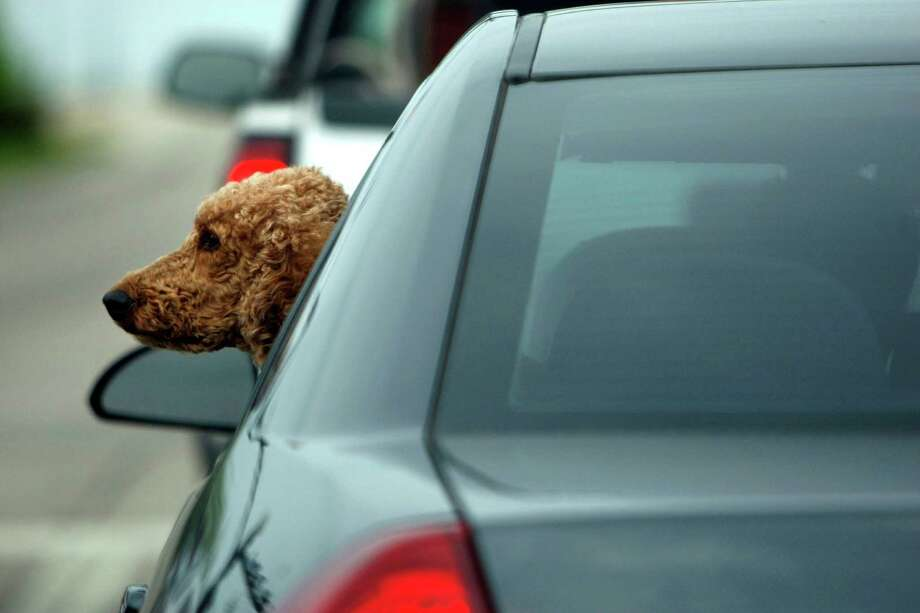 Pets left in cars