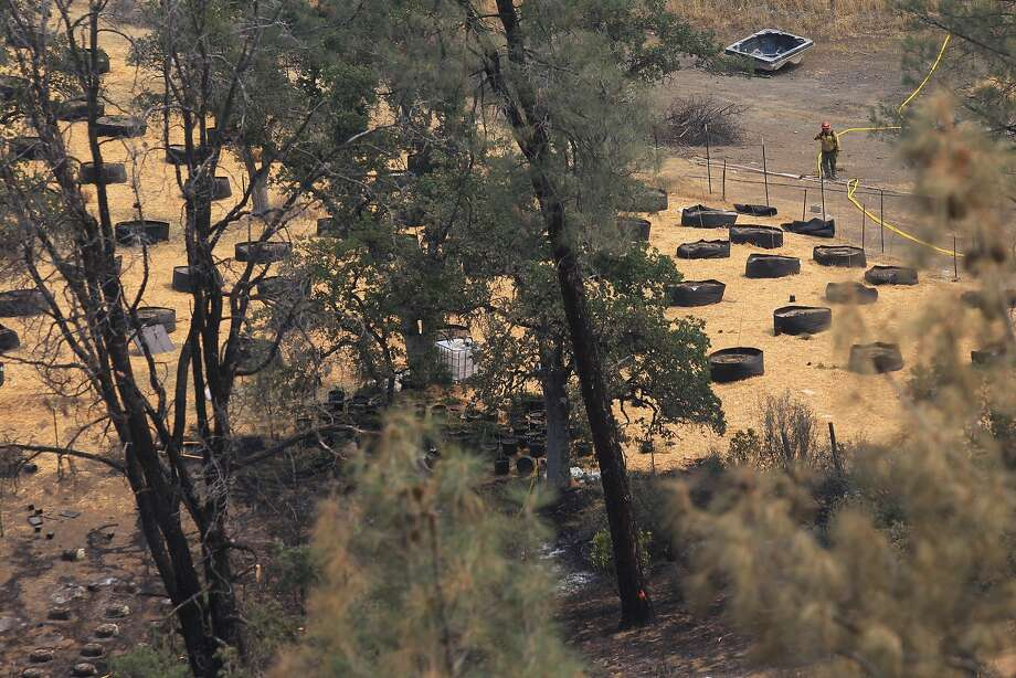Firefighters on Monday, July 14, 2014, mop up the area where the Bully Fire started at an illegal marijuana grow near Ono, Calif. Freddie Smoke was arrested on suspicion of starting the fire and on charges of an illegal marijuana grow. Fire investigators say Smoke inadvertently sparked the fire when he started a rental truck packed with supplies for the grow parked in high grass.  Photo: Andreas Fuhrmann, Associated Press