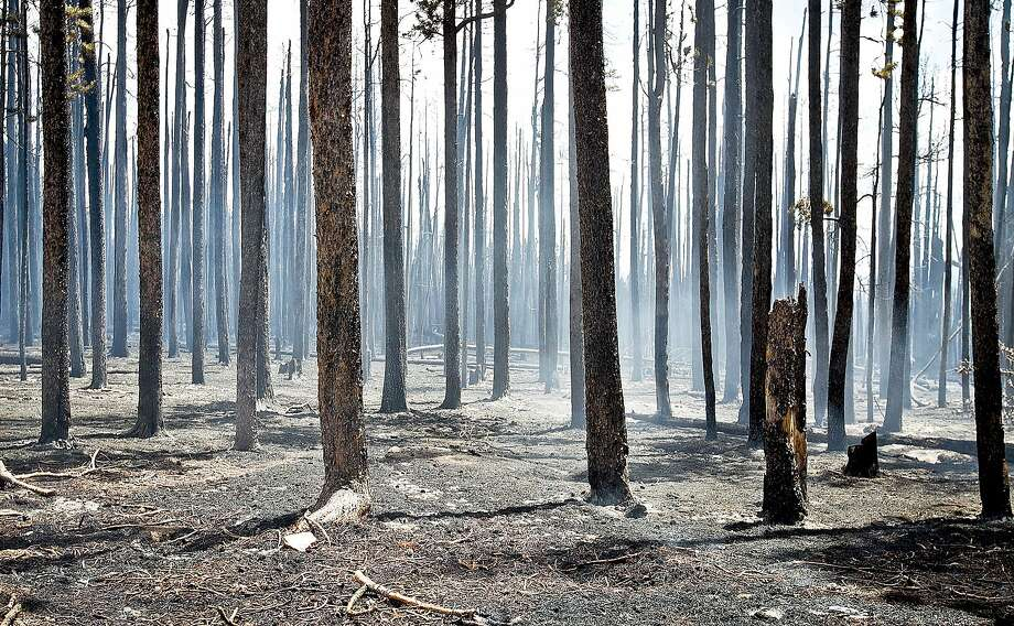 An area of pine trees near forest service road 540 smolders inside the fire containment area Wednesday, July 9, 2014, near Lake Owen in the Medicine Bow National Forest, west of Laramie, Wyo. Photo: Jeremy Martin, Associated Press