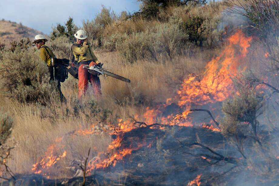 Kevin Green, left, and Brandon Scott shield themselves from the heat of a burning sagebrush as a wildfire threatens eight homes on Skyline Drive in Wenatchee, Wash., early Sunday morning, July 6, 2014. Matt Howard throws sagebrush clear of the fire line as a wildfire threatens eight homes on Skyline Drive in Wenatchee, Wash., early Sunday morning, July 6, 2014. He is a firefighter for the forest service based out of the Entiat Ranger District. Fire officials told residents to be ready to evacuate as the wildfire spread to several ridge lines behind the community on Sunday morning. The two are firefighters for the forest service based out of the Entiat Ranger District. No structures have burned.  Photo: Don Seabrook, Associated Press