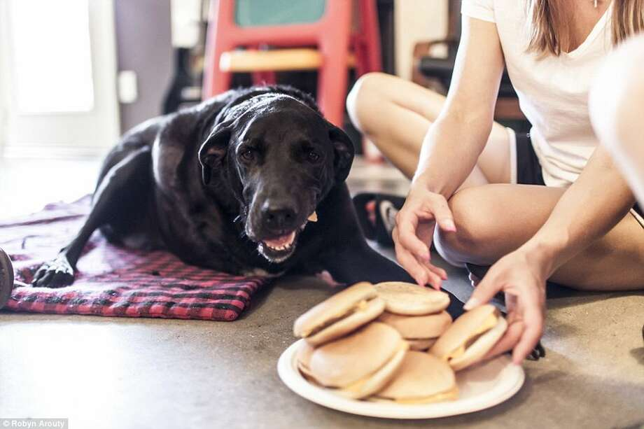 """A Texas photographer chronicled the last day of her friend's pet, in a post on a blog called """"I Died Today. By Duke Roberts."""" Duke had hamburgers and a party on his last day on earth. Photo: Courtesy Of Robyn Arouty / Robynarouty.com"""