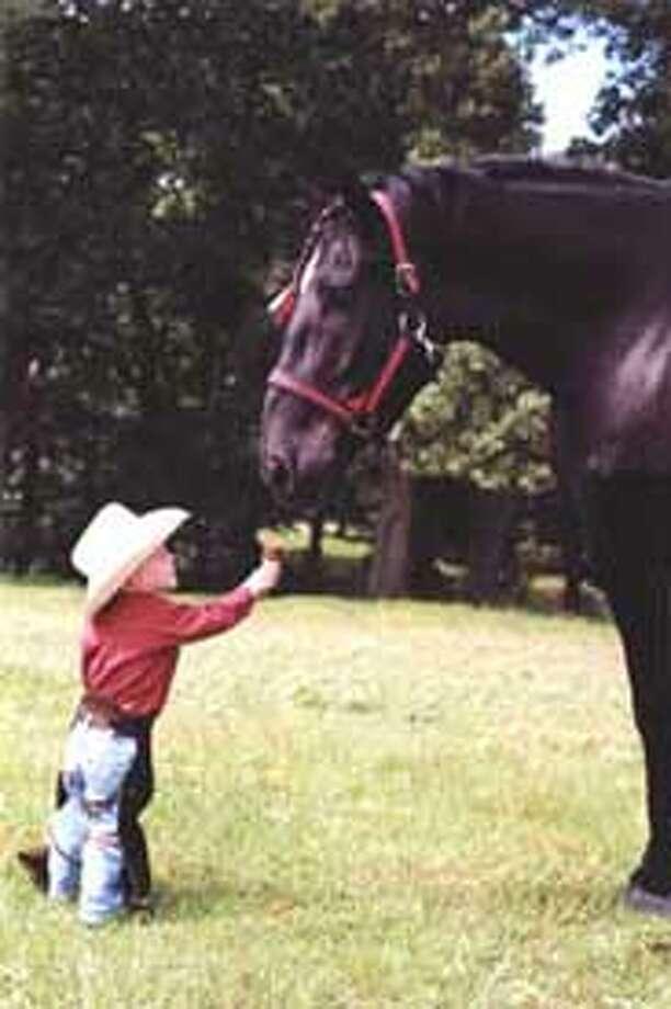 World's Tallest world tallest, tallest horse, worlds