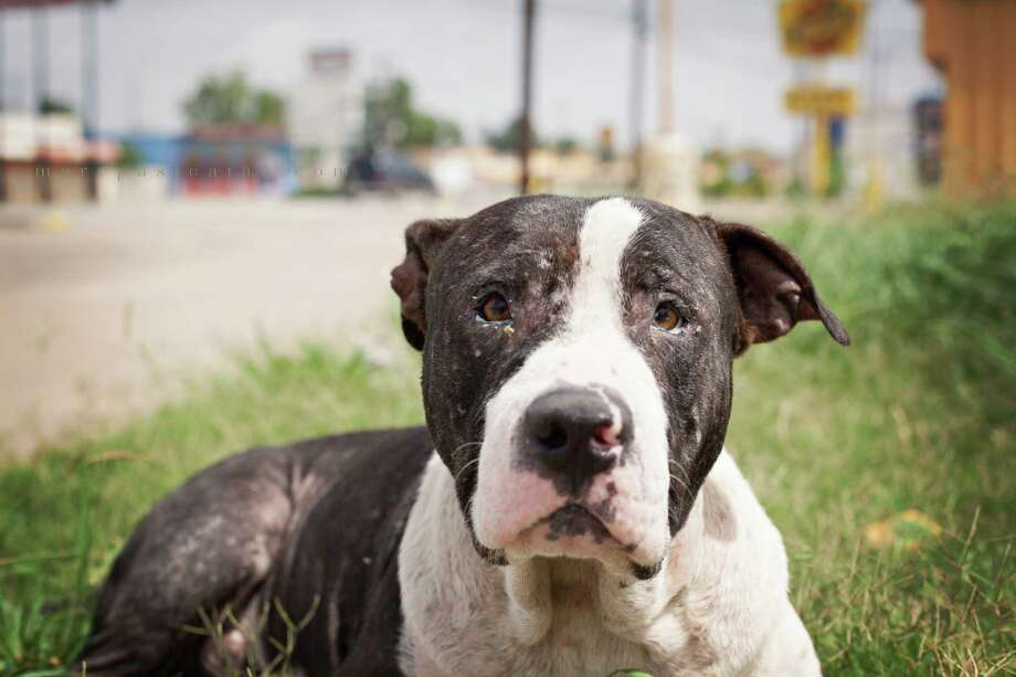 Houston's stray dogs are to be documented in the No One's Dog exhibition July 26-August 9th at DiverseWorks on Fannin St.