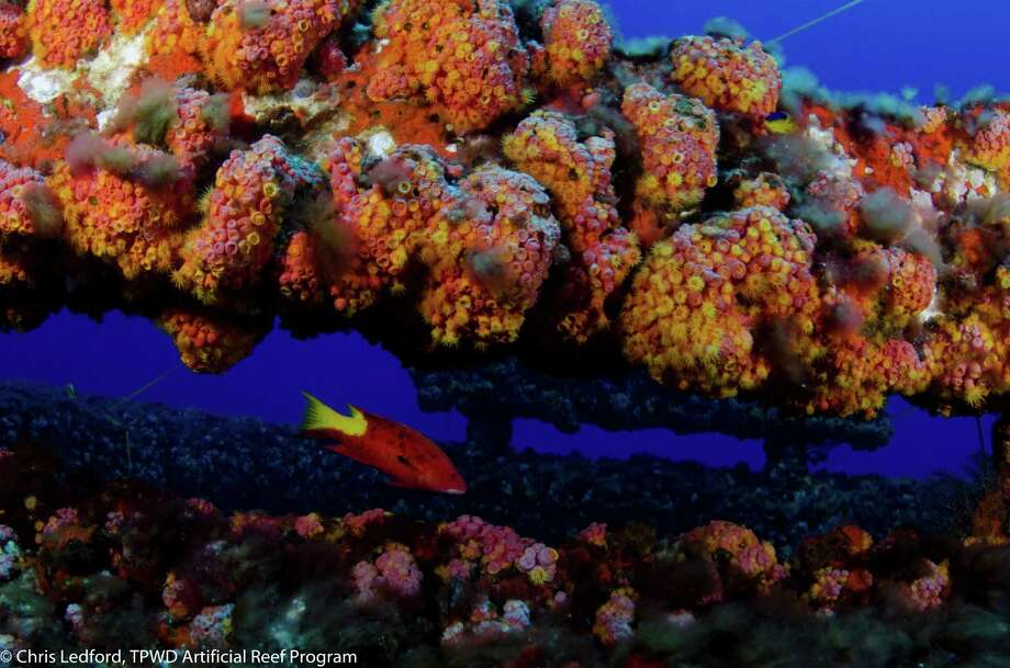 Artificial reefsHigh Island A-532 Reef, 74 nautical miles from Galveston. Photo: Chris Ledford / TPWD Artificial Reef Program  / Chris Ledford, TPWD Artificial Reef Program