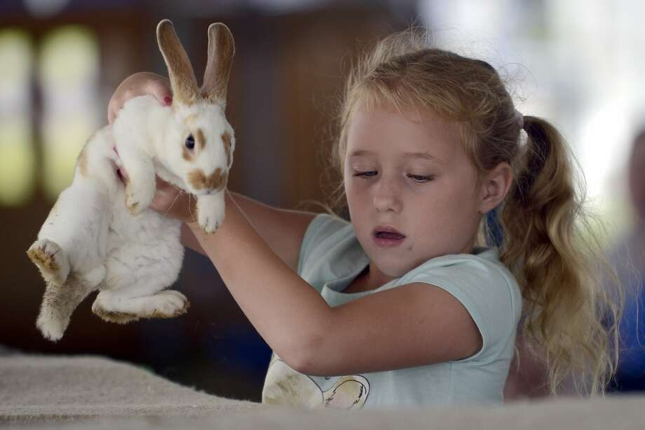 Watch me pull a rabbit out of my ...Six-year-old 4-H'er Sarah Noble handles a young bunny after 