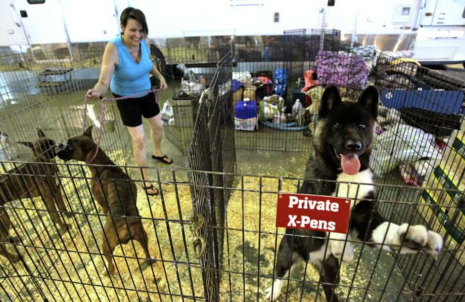 An Akita named Sausey looks over her exercise pen as handler Terri Galle of Douglassville puts a leash on a Boxer named Jake during set up for the Houston World Series of Dog Shows at NRG Center. Photo: Melissa Phillip, SCC / © 2014  Houston Chronicle