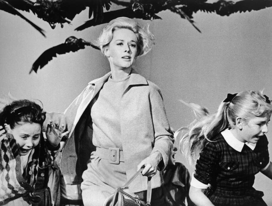 Hitchcock's 'The Birds' was filmed in Bodega Bay and S.F.'s Union Square. Photo: Universal Studios, Getty Images
