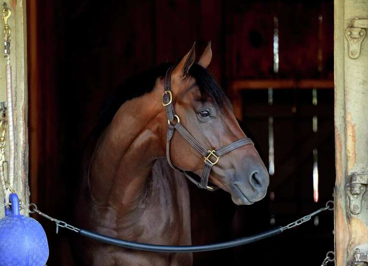 Sanford Stakes entrant Nana's Boy enjoys a quiet moment in his stall in the Pletcher barn at the Okl