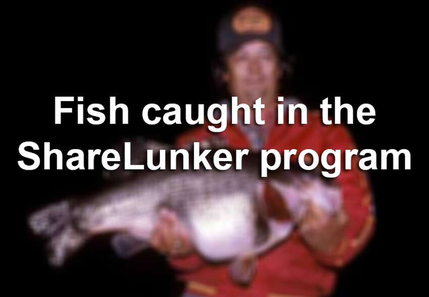 The state's ShareLunker program encourages anglers to lend or donate any largemouth bass weighing more than 13 pounds to the state for spawning purposes. Here are the big fish caught in the program going back to 1986.