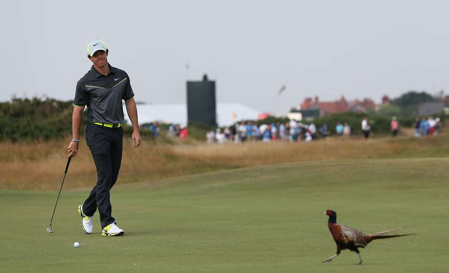 Fowl on the fairway: Rory McIlroy goes for birdie on No. 8 at the British Open Golf championship at Royal Liverpool. Photo: Scott Heppell, Associated Press
