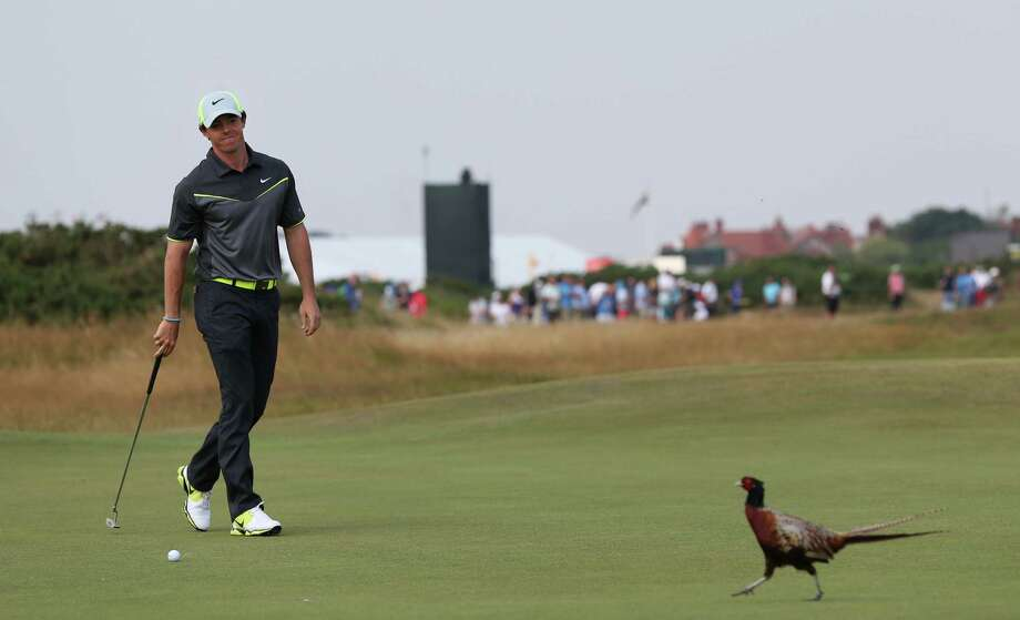 It was a day full of birdies - seven - and pheasants - one- for Rory McIlroy, who shot a second consecutive 66 and leads Dustin Johnson by four strokes going into today's third round of the British Open. Photo: Scott Heppell, STR / AP
