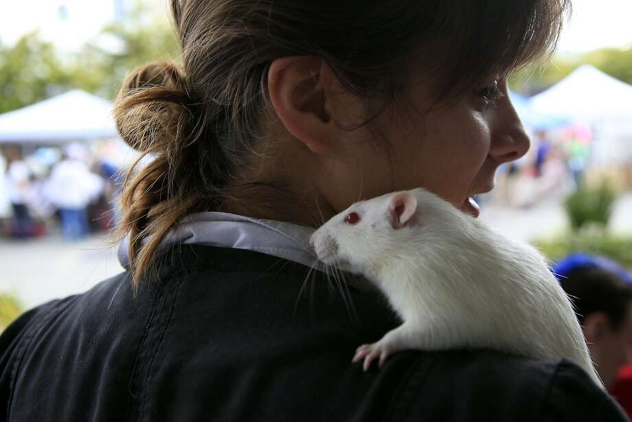 Elsa Glembotzki of Rattie Ratz, a rat rescue and adoption company, holds a rat named Vanilla during the 6th annual East Bay SPCA Adoptathon held at Jack London Square in Oakland, CA, Saturday, July 19, 2014. Photo: Michael Short, The Chronicle