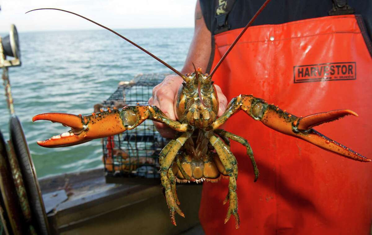 Mike Kalaman holds a lobster on his boat, Dark Horse, on the Long Island Sound on Wednesday, July 9, 2014.