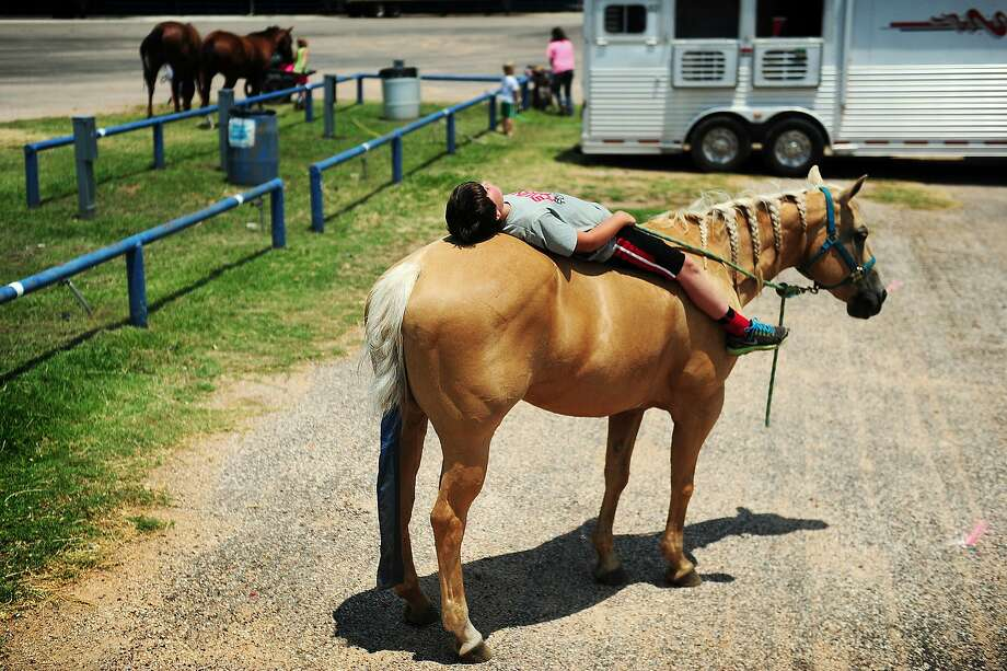Kids can sleep anywhere, part II:Will Fairbanks, 9, naps on Susie after traveling from his home in   Shallow Water, Texas, to the State 4-H Horse Show in Abilene. Photo: Joy Lewis, Associated Press