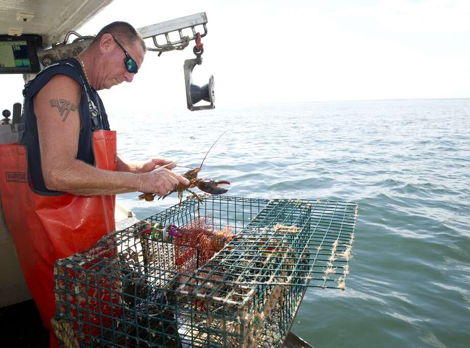 Mike Kalaman measures lobster on his boat, Dark Horse, on the Long Island Sound on Wednesday, July 9, 2014. Photo: Lindsay Perry