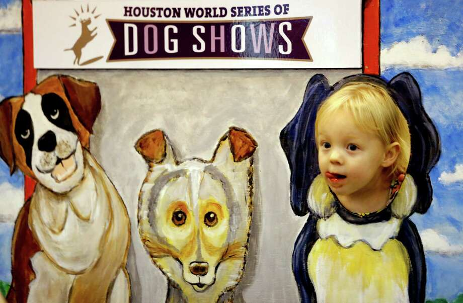 Maryellen Bumbera competes in Freestyle Dog Dancing with Amee, a rescued border collie and Jack Russell terrier mix, during the Houston World Series of Dog Shows on Sunday. Photo: Melissa Phillip, Staff / © 2014  Houston Chronicle
