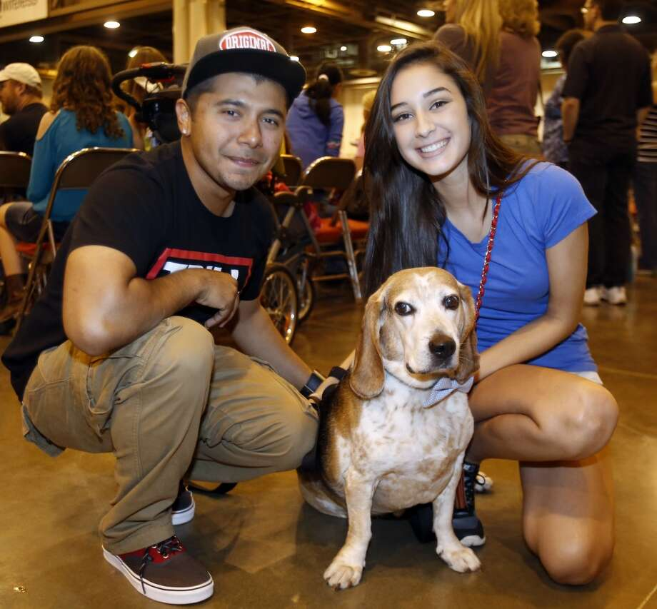 Last year the Houston World Series of Dog Shows descended once again on the NRG complex. Here are 10 things we learned from the show ... Photo: Melissa Phillip, Houston Chronicle