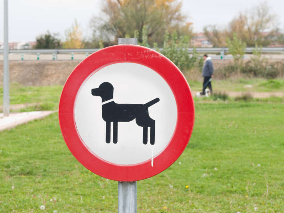 No one heeded those signs to keep dogs off the NRG complex grass.You know who you are, but then again, how are you going to host a dog show and not expect some extra fertilizer on the green spaces? You're saving money on landscaping, big wigs. Photo: Carlos Ciudad Photos, Getty Images/Flickr Open / Flickr Open