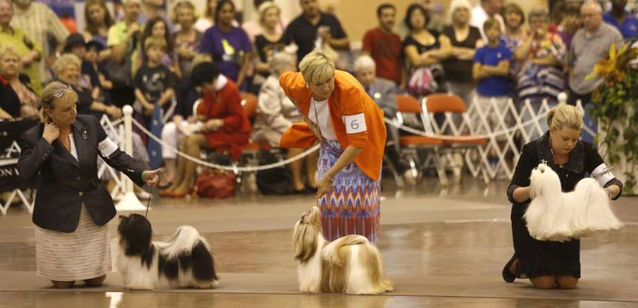 Houston's dog show is one of the top five in the country.This was according to a judge for one of the big finals (she declined to be ID'd, citing confidentiality among judges) whose job it seems is to fly around the country to look at doggies. Great, another accolade for Houston. First we're tops in jobs, and now we hear we give great dog show. Photo: Melissa Phillip, Houston Chronicle