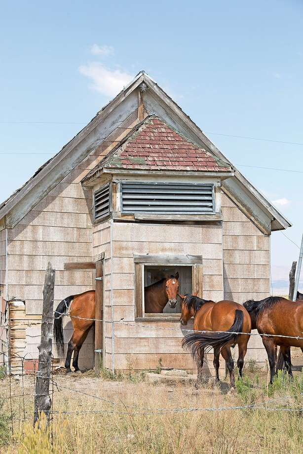 I don't know about the rest of you, but I'm getting an education!A horses enters the old Jiggs 