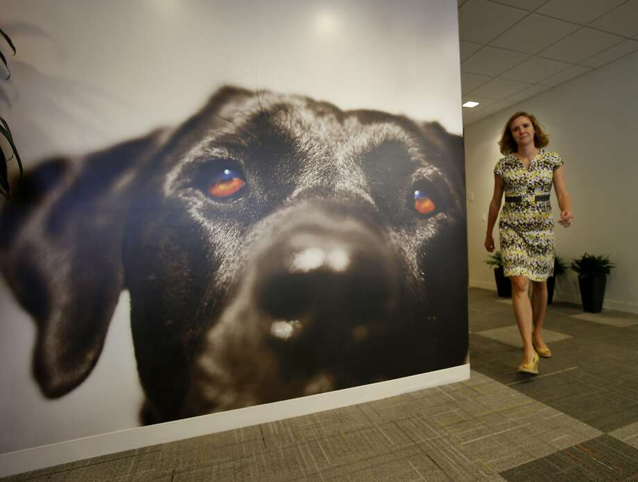 Covahne Michaels walks by a large dog photo that adorns a lobby wall at Big Heart Pet Brands in S.F. Photo: Brant Ward, San Francisco Chronicle