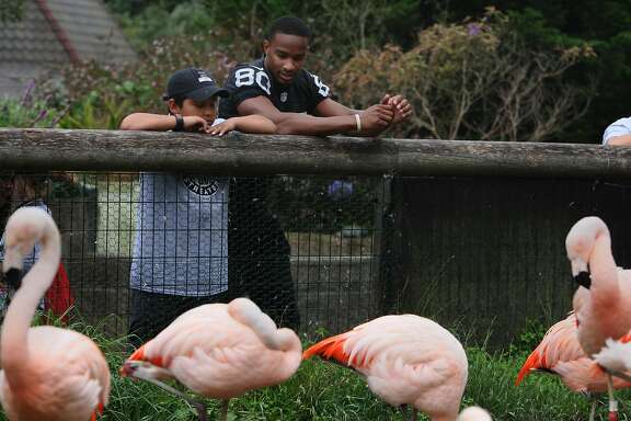 Raiders Wide Receiver Rod Streater looks at flamingos with Arnold Morales, 11, at the San Francisco Zoo on July 21, 2014 in San Francisco, CA. The Rod Streater Foundation and the San Francisco Zoo hosted children and family members from the Ronald Mcdonald houses at Stanford and San Francisco.
