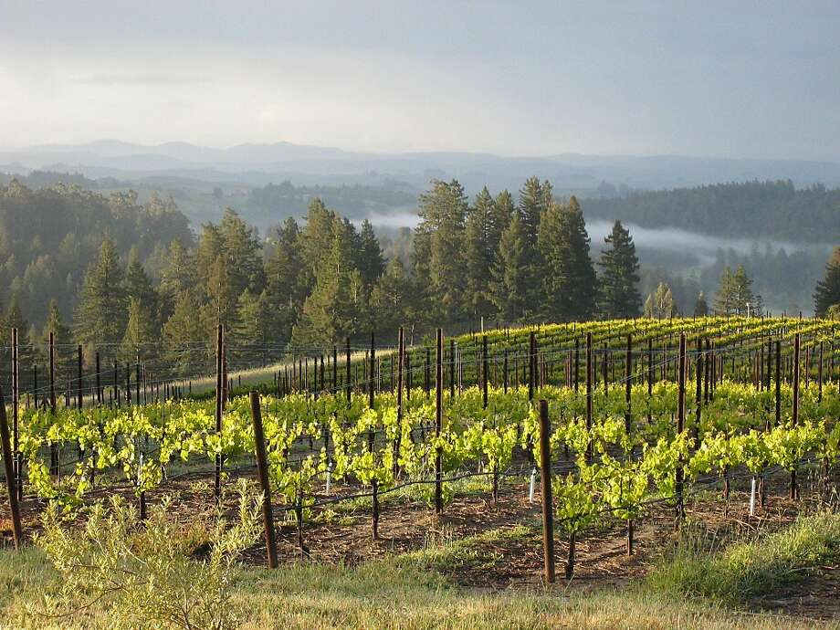 Occidental Road Cellars' vineyards sit on a ridge straddling the Sonoma Coast and Russian River Valley appellations. Photo: Courtesy The Prather Family