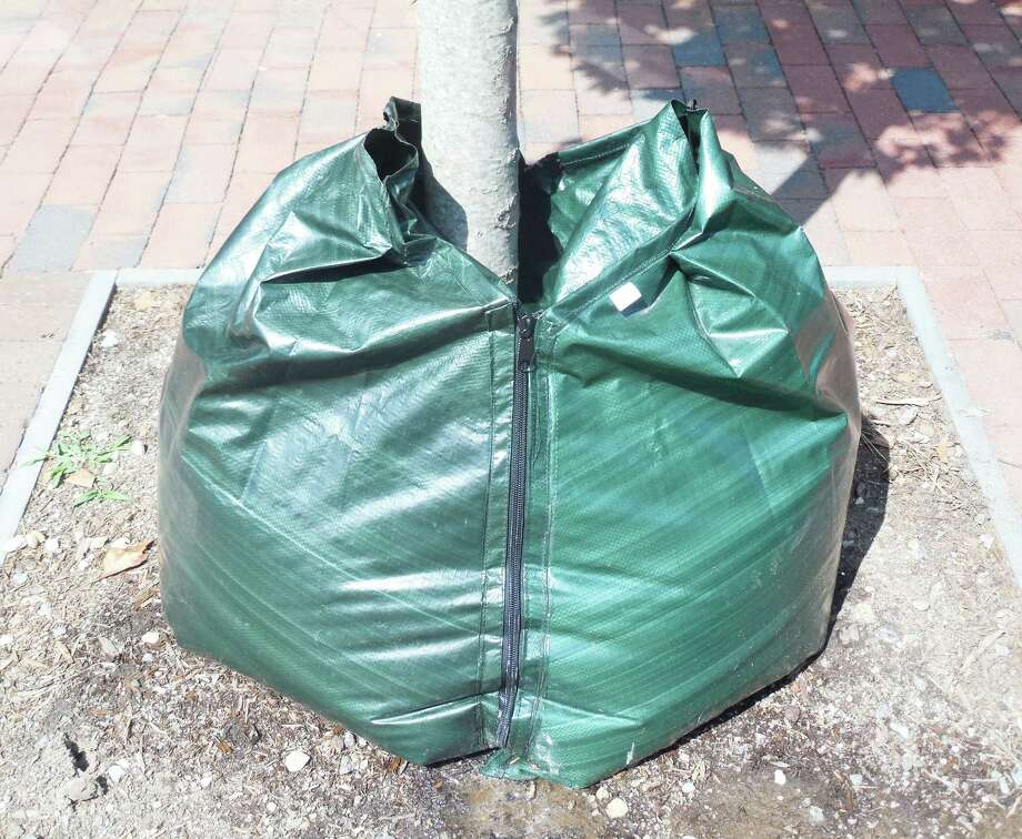 One of the large green bags installed at the request of the town's tree warden that provide up to 20 gallons of water and can be refilled weekly to provide the needed hydration to the new plantings along Main Street through the harsh heat of summer. Photo: Anne M. Amato / westport news