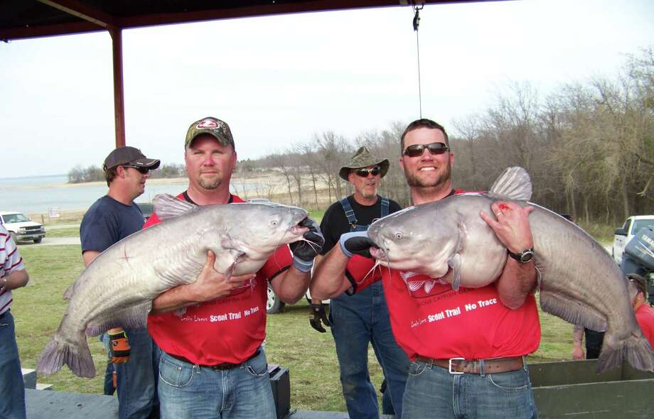 1st place at this year's King Kat tournament on Lake Tawakoni went to Justin Cook and Roger Gerloff from Missouri with a five fish weigh in at 217.15 pounds.  Officials fear big hauls like this will attract more people from out-of-state and deplete catfish stocks.Click through to see more giant catfish catches from this tournament and from the area's Noodlers who fish by hand! Photo: Cabela's King Kat Tournament Trail