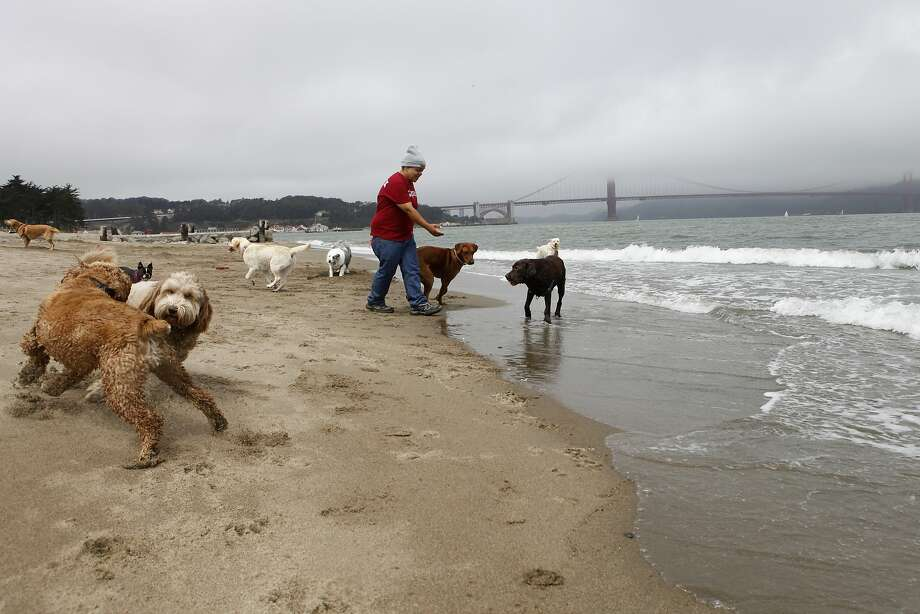 Crissy Field: Dogs are allowed off-leash everywhere except the Wildlife Protection Area at the west end of Crissy field beach where leashes are required all year except from May 15 to July 1. For latest information Photo: Katie Meek, The Chronicle
