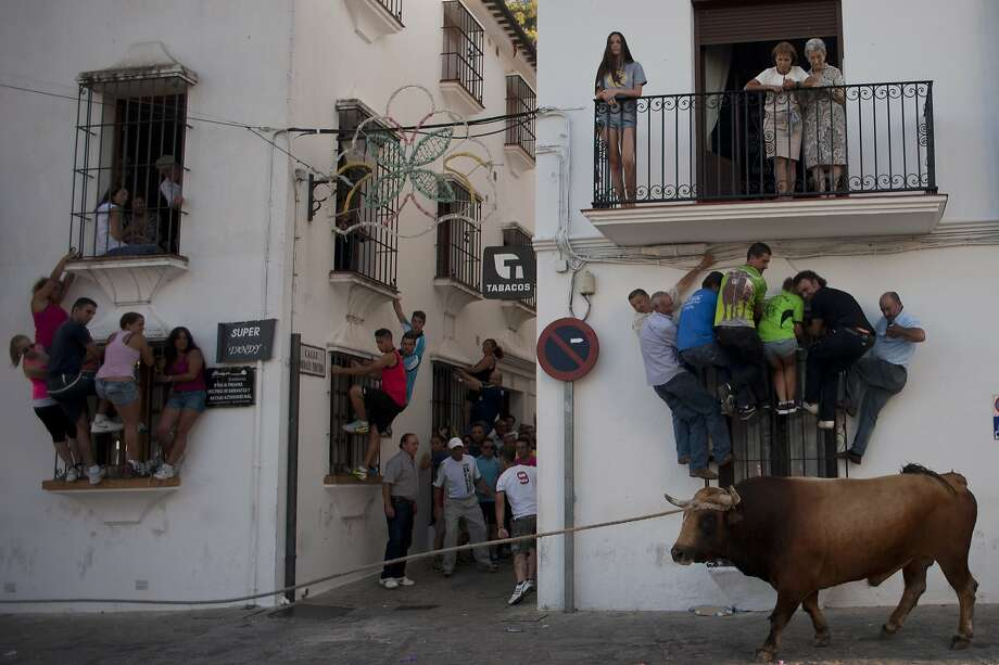 Spain's other bull run: The Running of the Bulls in Pamplona is always followed a few weeks later by the Cowering of the People in Grazalema. Photo: Jorge Guerrero, AFP/Getty Images