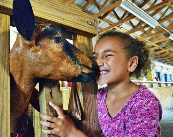 icole Gerdes, 9, of Saratoga Springs gets a kiss from her goat Molly on opening day of the Saratoga County Fair Tuesday July 22, 2014, in Ballston Spa, NY.  (John Carl D'Annibale / Times Union) Photo: John Carl D'Annibale / 00027870A