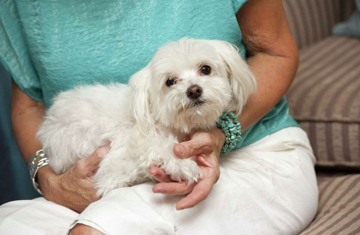 Dinah Miller holds Reese, her Maltese who ran away during a trip to Dallas in 2007, at their home in Tyler, Texas on Tuesday, July 22, 2014. Reese was discovered in Tacoma, Wash. seven years later and was returned home to the Miller family in Texas on Tuesday. (AP Photo/Tyler Morning Telegraph, Sarah A. Miller)