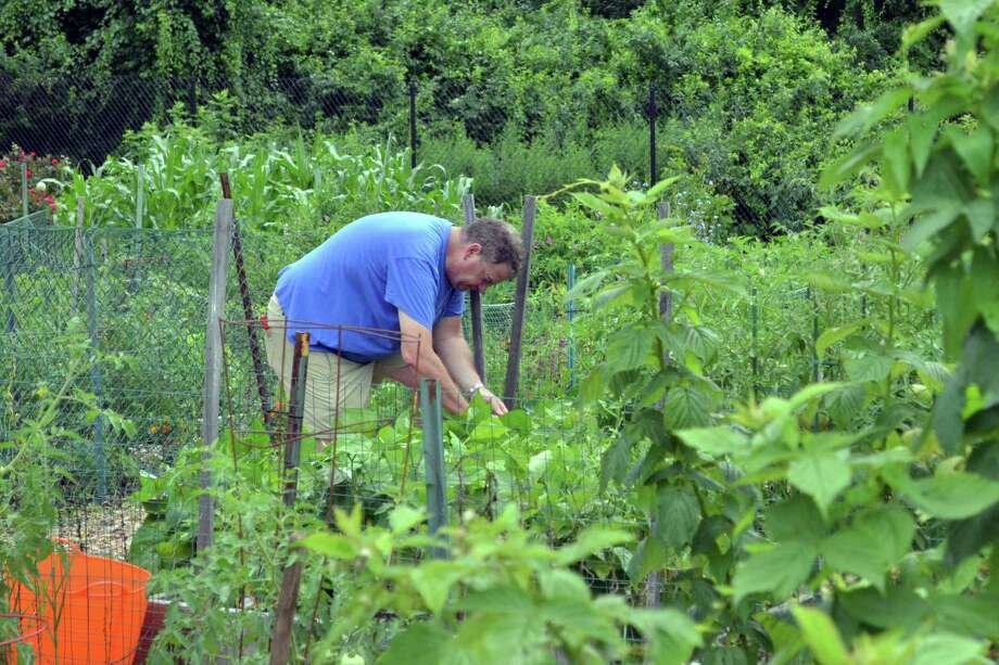 Jim Brewer tends to his garden at the Cherry Lawn Community Gardens. Photo: Megan Spicer / Darien News