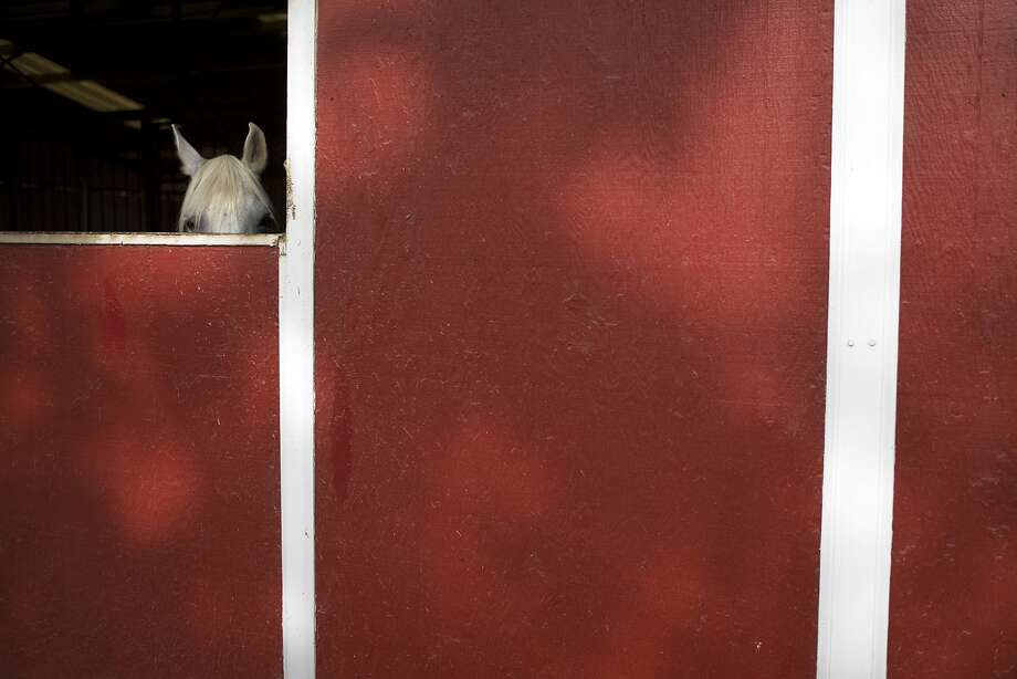 Horses without homes: A rescued horse peeks out of a stable at the Red Bucket Equine Rescue in Chino Hills, Calif. Almost 