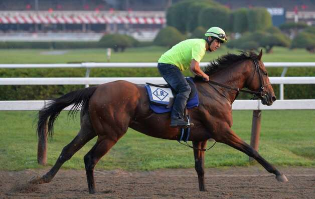 Possible Jim Dandy Stakes entrant Kid Cruz, stretches his legs on the track early Wednesday morning July 23, 2014 during his exercise period on the main track at the Saratoga Race Course in Saratoga Springs.     (Skip Dickstein / Times Union) Photo: SKIP DICKSTEIN, ALBANY TIMES UNION