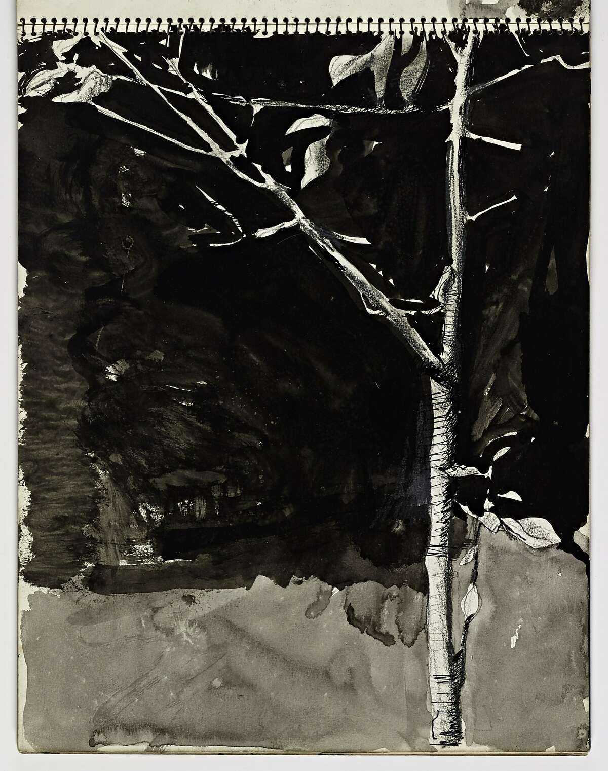 Untitled (Tree) (1943-93) Brush and ink, pen and ink and graphite on paper by Richard Diebenkorn