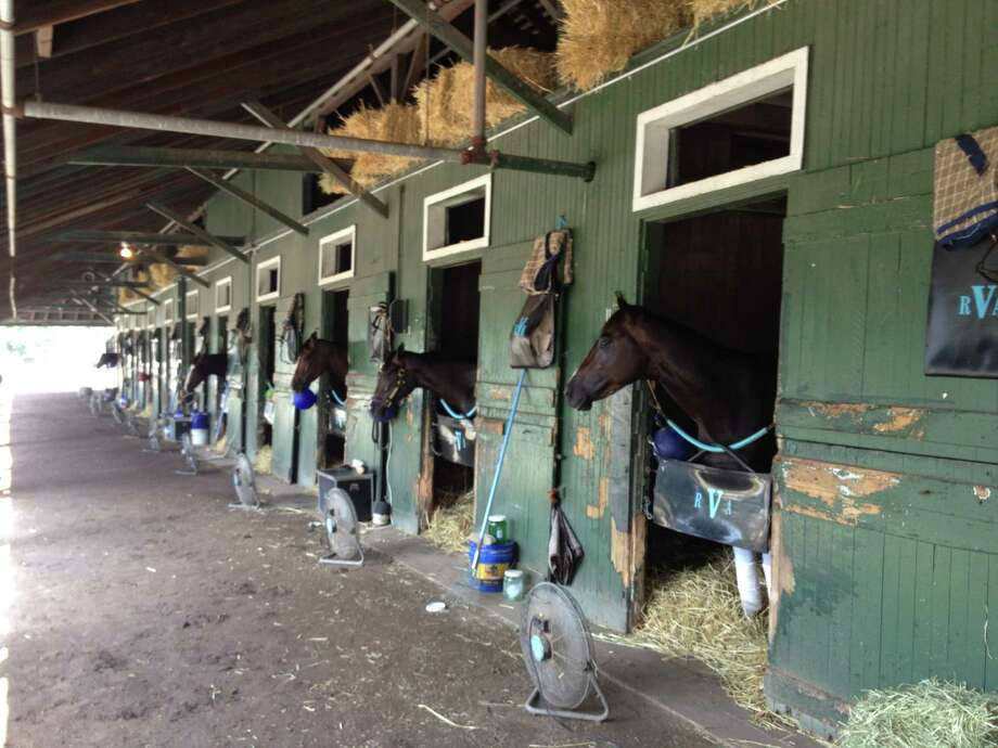 Horses doing what they do when the morning exercise is over at Saratoga Race Course. ( Tim Wilkin / Times Union )