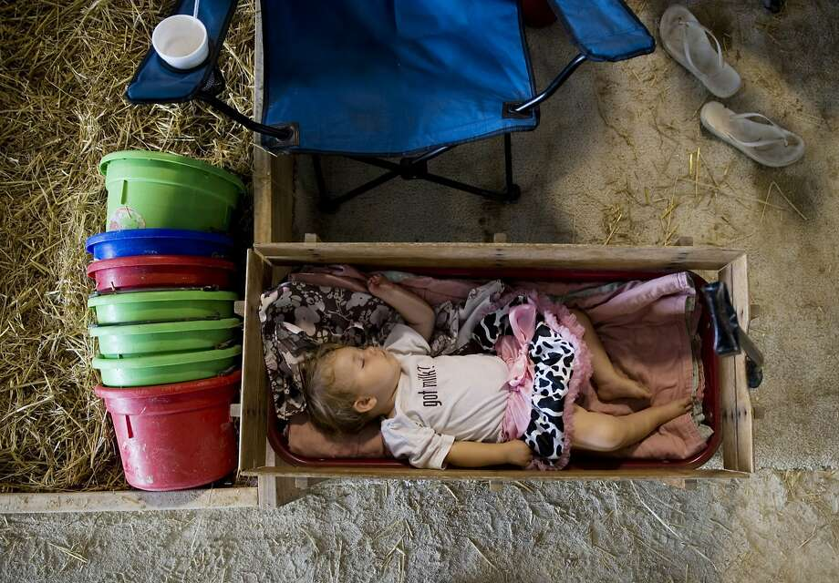 Isabella Schmitt, 1, sleeps in a wagon near her family's Holstein dairy cows at the Vanderburgh County Fair, Wednesday, July 23, 2014. (AP Photo/The Courier & Press, Denny Simmons) Photo: Denny Simmons, Associated Press