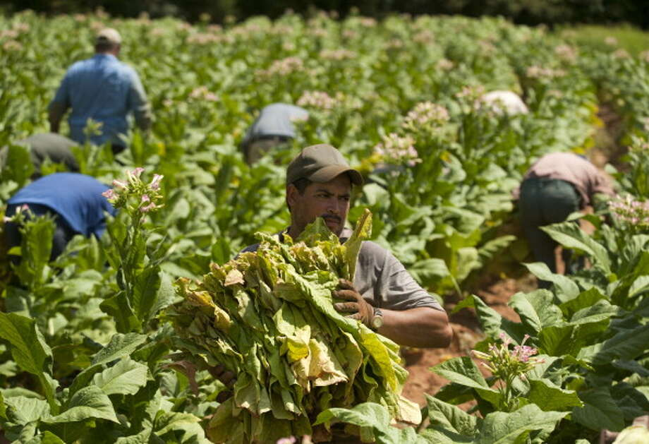 No. 8:Farmworker and laborer, crop, nursery, and greenhousehourly wages: $9.65annual wages: $20,080Employees in the field: 261,720 Photo: Bloomberg, Getty Images / 2012 Bloomberg