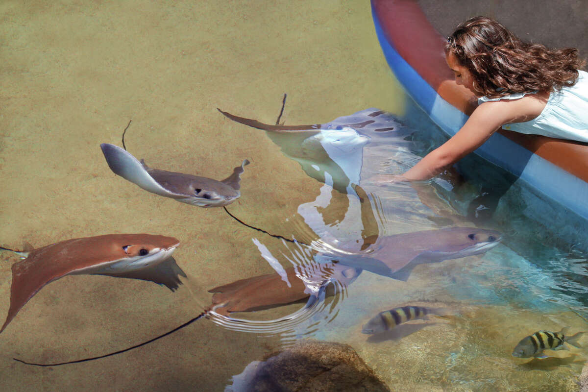 Stingrays say hello in this file photo of the Texas State Aquarium in Corpus Christi. The attraction is vying to become the Best North American Aquarium.