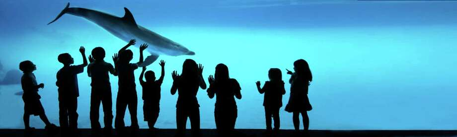 The Texas State Aquarium in Corpus Christi was named second best aquarium in North America.Click through the slideshow for the 20 best aquariums on USA Today's list. Photo: Courtesy Texas State Aquarium