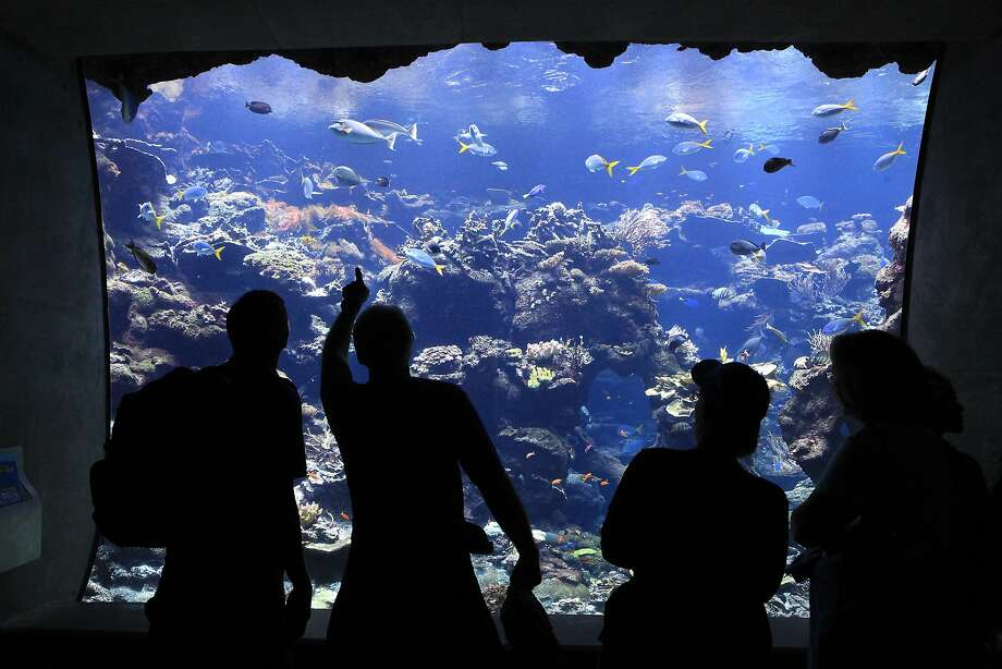 Guests look at fish in the Coral Reef Exhibit in Steinhart Aquarium section of the California Academy of Sciences in San Francisco, CA, Tuesday, July 22, 2014. Photo: Michael Short, The Chronicle