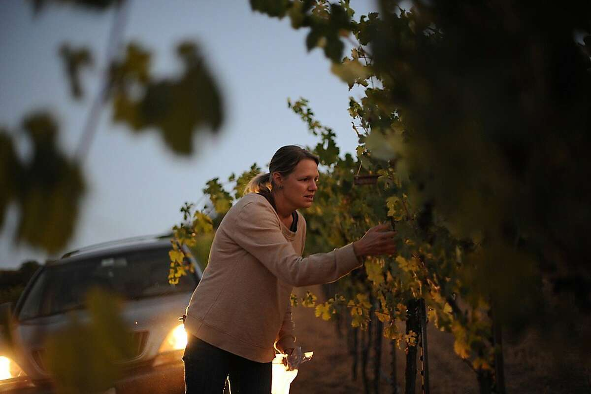 Stephanie Terrizzi of Giornata in Paso Robles during harvest 2012.