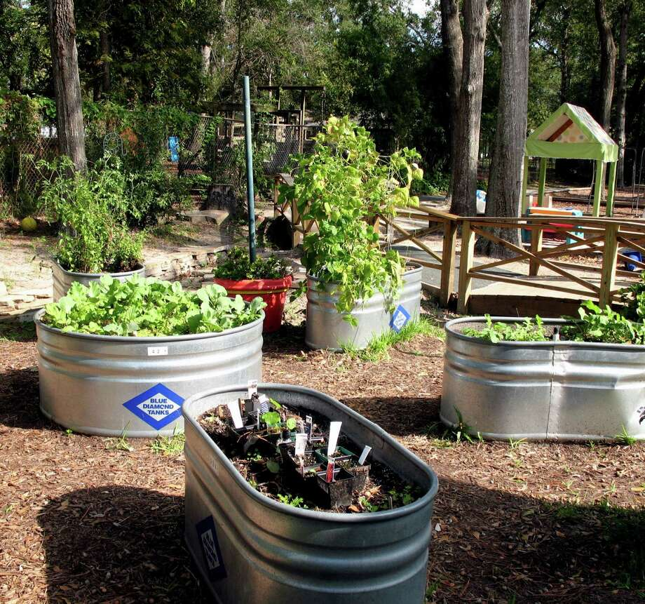 Galvanized stock tanks come in a variety of sizes, mostly large. The smallest I've found is four foot diameter. But, their large size allows for ample planting area. Relatively speaking, they are also fairly inexpensive. Photo: Picasa