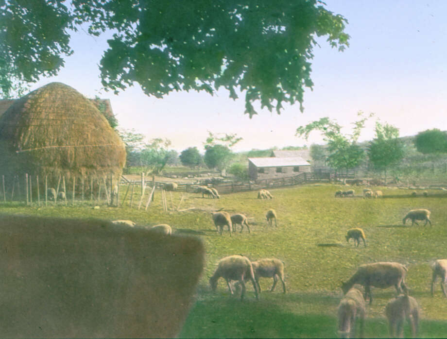 "On display at the Fairfield Museum & History Center is Mabel Osgood Wright's painted slide of ""Bronson Herd on Bronson Road,"" about 1900. Photo: Contributed Photo / Connecticut Post Contributed"