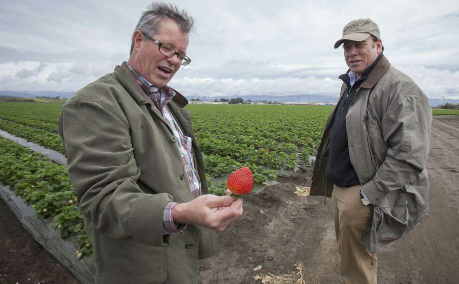Steve Fessler (left), vice president at Prudential Agricultural Investments, shows a strawberry to Thomas Gimbel, a hedge fund executive at American Farmland Company, at a farm in Watsonville, Calif. Photo: Peter DaSilva / New York Times / NYTNS